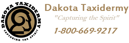 Dakota Taxidermy